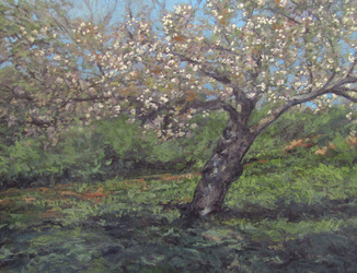 Spring Blossoms,Spring Flowers,Cherry Blossoms,Cherry Tree,Cherry Blossoms,Cherry Flowers,Modern Impressionism,Oil on Panel,Gregory Arnett Landscape